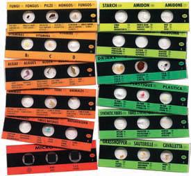 3554-ZB1 PREPARED MICRO SLIDES 12 SLIDES